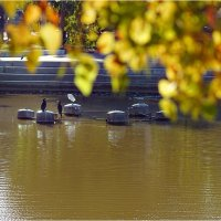 Осень а парке Яркон! :: Борис Херсонский