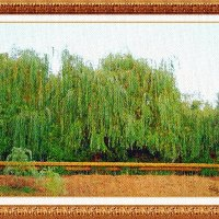Плакучая ива :: Лидия (naum.lidiya)