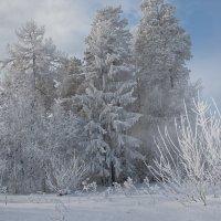 Ледяное дыхание зимы :: vladimir Bormotov