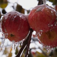 Яблоки во льду :: Владимир Макаров