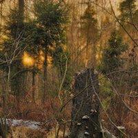 пень на закате :: sergej-smv