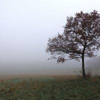 В тумане :: Игорь Замлинский