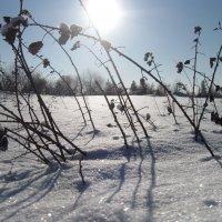 Снег и солнце :: Вера Андреева