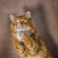 Обращение Тихона к кошачьему богу...) :: Ольга Гусева