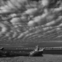 Зефирное небо :: Мария Конкина