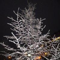 Зимний вечер :: Александра Гай