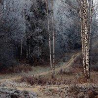Первый иней. :: Leonid Volodko