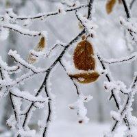 встреча Осени и Зимы :: Мария Климова
