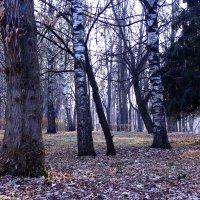 Красота ноября :: Татьяна Ломтева