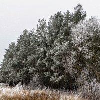 Вот и пришла зима, первый иней, первый снег :: Анатолий Клепешнёв