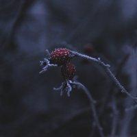 Первый зимний поцелуй... :: Мария Панькина