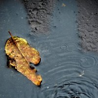 осень :: Наталья Золотарева
