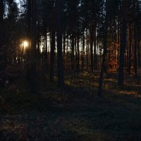 Вечерний лес :: Viktoria Tkach