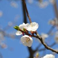 Весна... :: Сергей Саблин