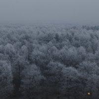 Зимний лес в сумерках :: Николай Ефремов