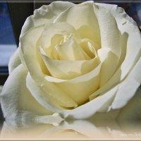 Белоснежная невеста :: Лидия (naum.lidiya)