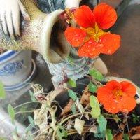 Цветы :: Любовь Шатура