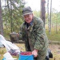 Приличный урожай! :: Андрей Синицын