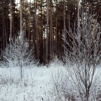 Зима :: Ольга Бекетова