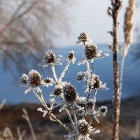 Мороз :: Елена Люлева
