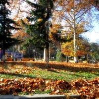 Осень в парке :: Наталья (D.Nat@lia) Джикидзе (Берёзина)