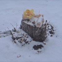 Под первым снегом... :: Нина Корешкова