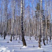 Апрельский лес :: Александр Смирнов