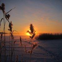 мороз и солнце...день чудесный... :: Ольга Cоломатина