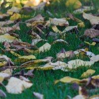 Осень :: Alex