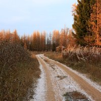 Поздней осенью. :: Galina S*