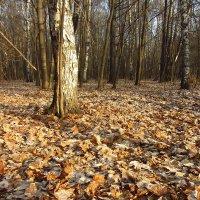 IMG_6131 - Еще шаг до зимы :: Андрей Лукьянов