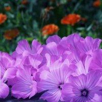 Лепестки цветов :: Валерий Талашов
