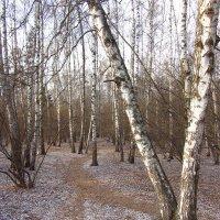 IMG_6181 - Еще шаг до зимы :: Андрей Лукьянов