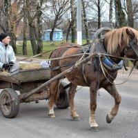 гужевой транспорт :: Андрей Иркутский