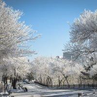 *Морозное утро :: Igor (Игорь) Churackoff (Чураков)