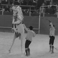 Момент, движение, лошади :: Alena Soldatova