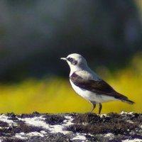 Птичка (не знаю как называется). :: Роман Маркин