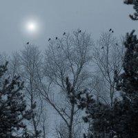 В свете луны :: Валерий Талашов