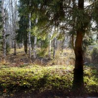 В осеннем парке :: Валерий Талашов