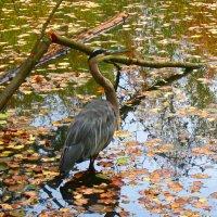 Осенний пруд :: Lyudmila Gruzdeva