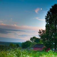 когда деревья были большие :: Тася Тыжфотографиня
