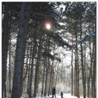 В лес за чудесами... :: Тамара (st.tamara)