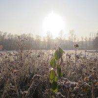 зима с зелёными листьями :: Елена