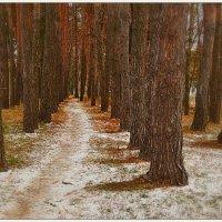 Тропинка в зачарованный лес :: Svetlana Kravchenko
