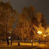 Ночной сквер :: Виктор Четошников