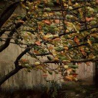 Резкий ветер листья гонит... :: Шаметько Инесса