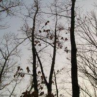 Поздняя осень :: Инна Буяновская