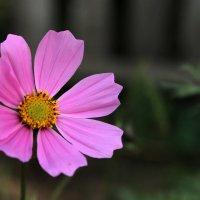 Цветок как символ красоты :: Галина Galina