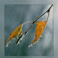 Осень , последние дни... :: Юрий Гординский