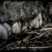 Мертвые зубы :: Lor De-Mall